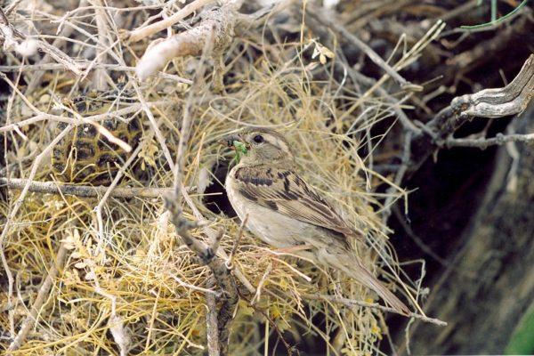 world sparrow day
