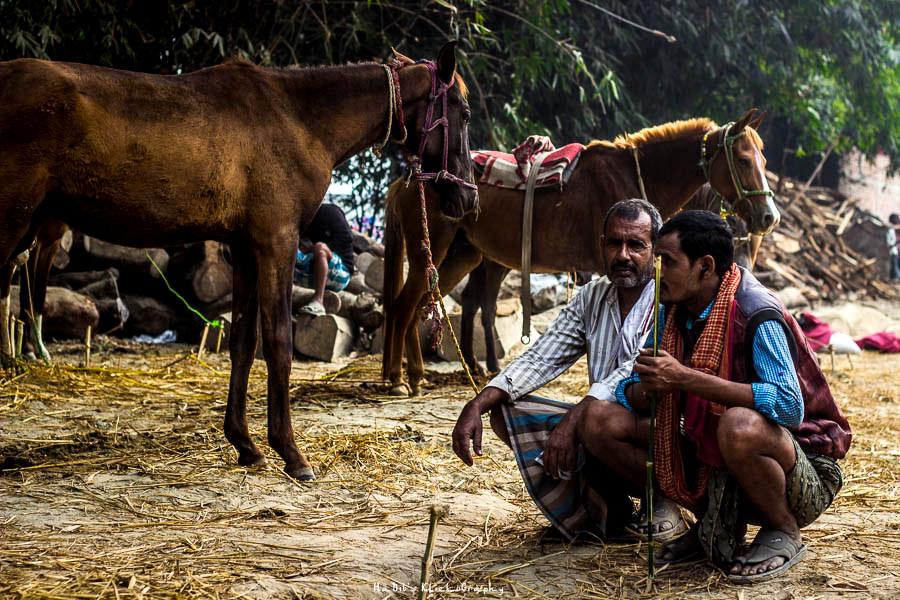 Sonepur Mela Horse