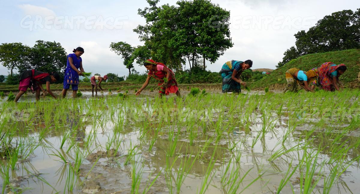 Kedia village