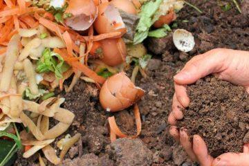 Compost points, Patna
