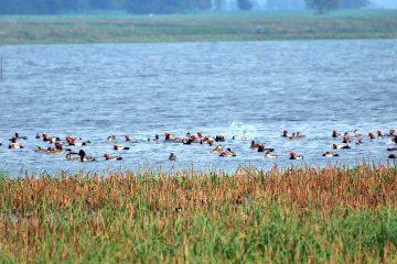Gogabeel lake