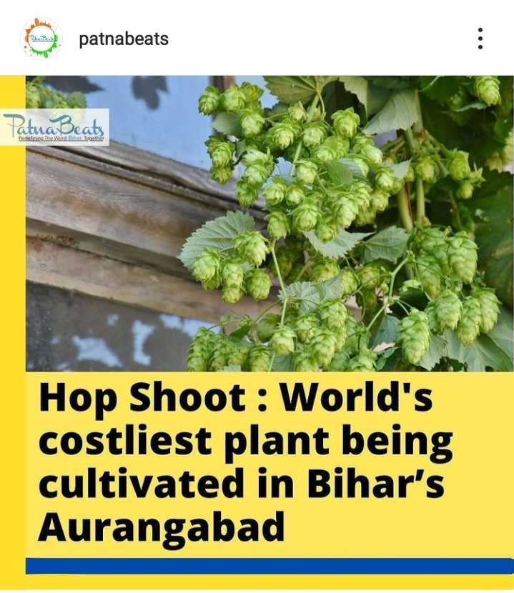 World's costliest plant being cultivated in Bihar's Aurangabad turns out to be a lie as per report